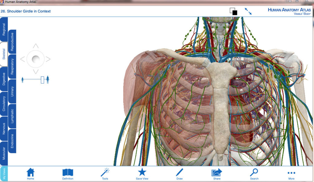 Human Anatomy Atlas - Download [123 MB]