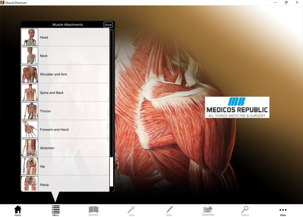 Visible Body Muscle Download
