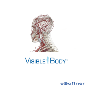 Visible Body Muscle